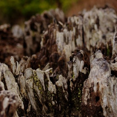 Close up of Stump
