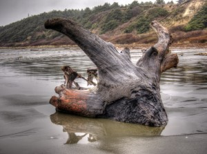 Pacific Beach Driftwood