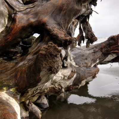 Pacific Beach Driftwood 5