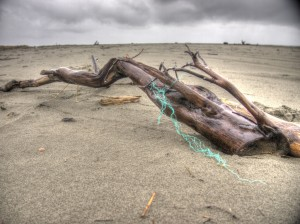 Driftwood and Netting