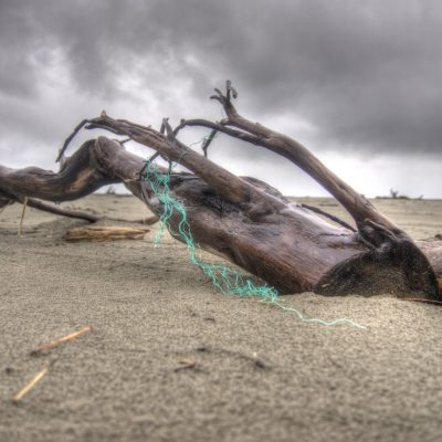 Driftwood and Netting 2