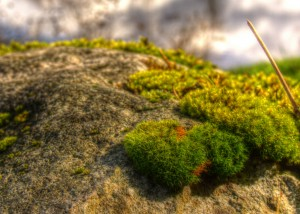 Moss and stone one