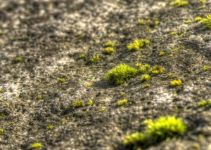 Moss and stone two