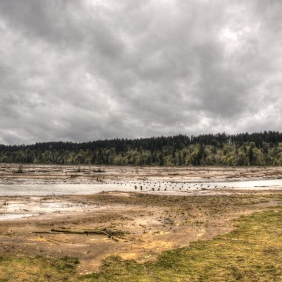 Nisqually Wildlife Refuge reclamation