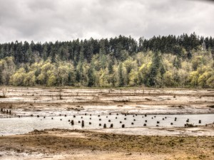Nisqually Wildlife Refuge reclamation 2