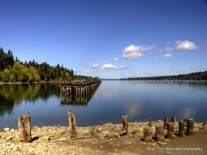 Woodard Bay Conservation Area Trestle #6
