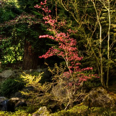 Splash of color. Portland Japanese Garden, Portland, OR