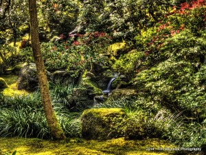 Peace in the garden. Portland Japanese Garden, Portland, OR