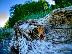 Tolmie State Park Beach Driftwood and Leaf