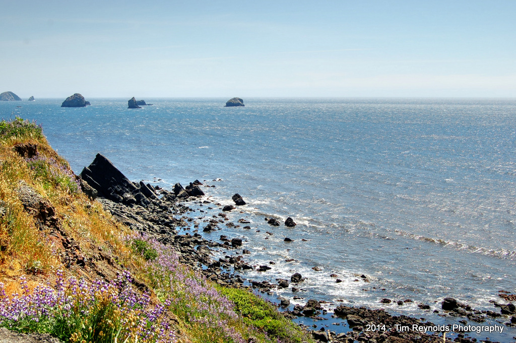 Coastal View with wild flowers